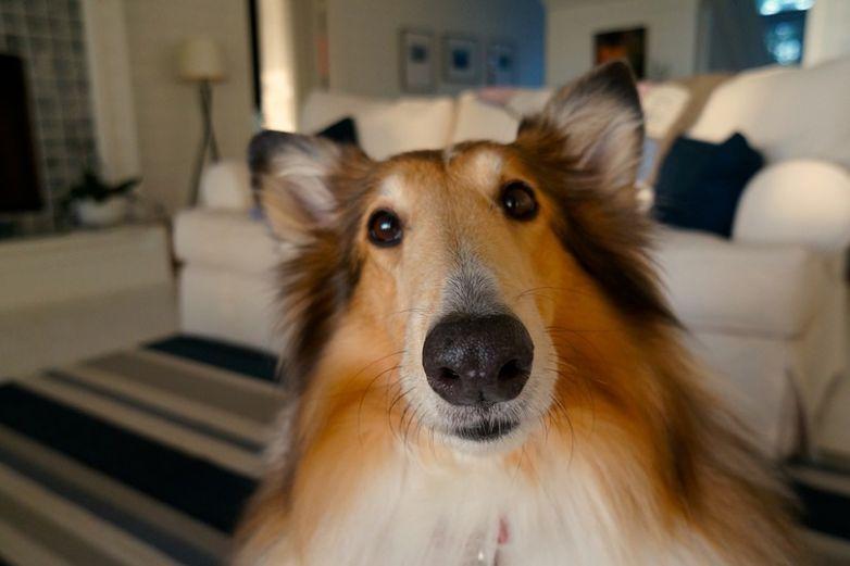 Detecta a tiempo la sarna en tus mascotas