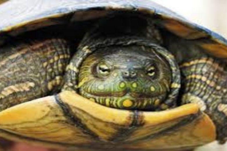 Bebé muere tras beber sangre de tortuga; brujo se la dio para salvarla del Covid