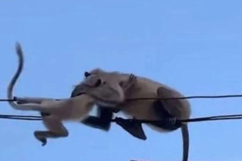 Mono realiza increíble hazaña para salvar a su cría