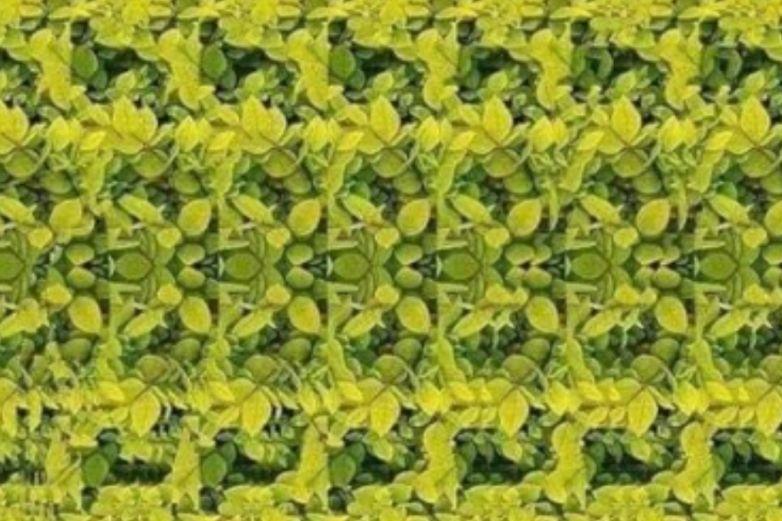 Encuentra a la jirafa, el nuevo reto viral de ilusión óptica en Facebook