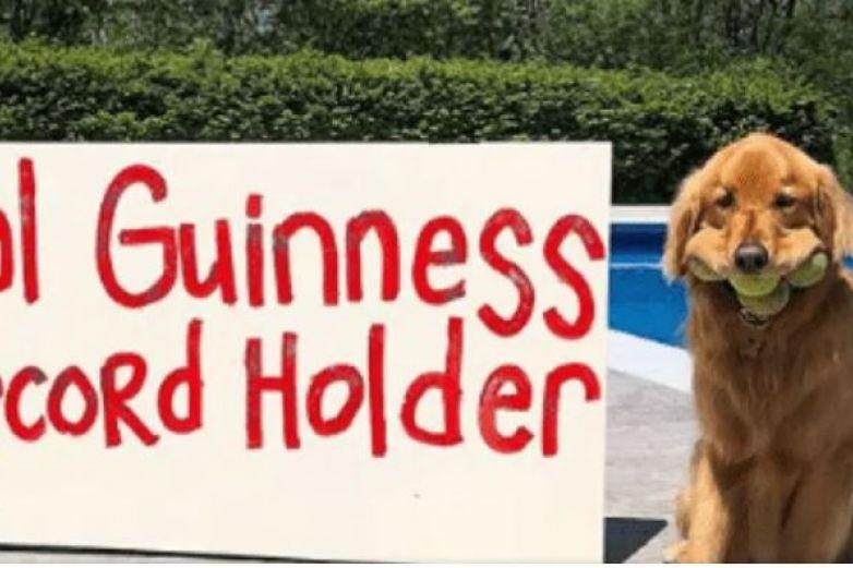 Perro obtiene Récord Guinness por guardar muchas pelotas en su hocico