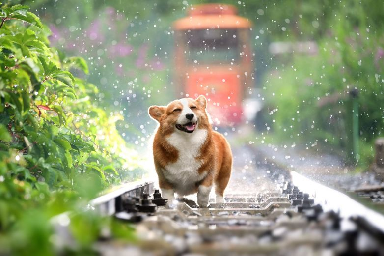 Evita que tus mascotas sufran un golpe de calor