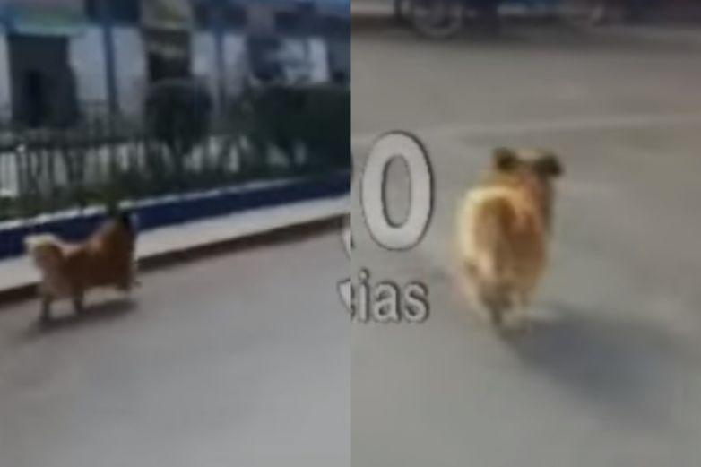 Perrito corre e intenta alcanzar a sus dueños que lo abandonaron