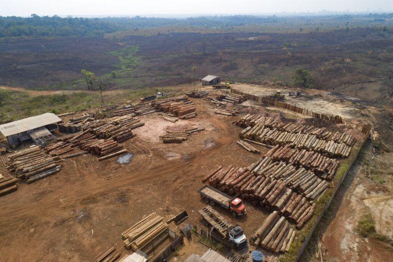 Corporaciones piden frenar tala ilegal en Amazonia