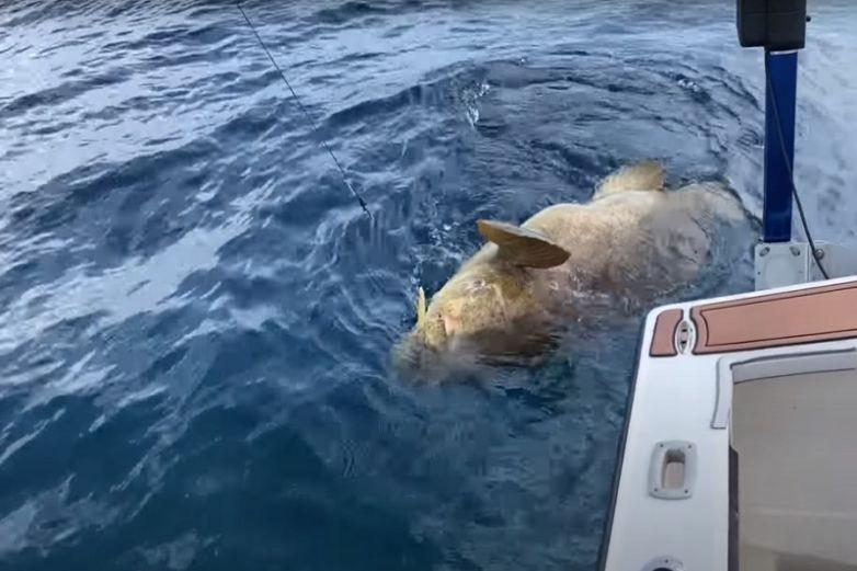 Intentan pescar enorme pez y los tira por la borda