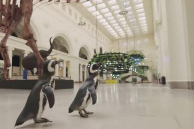 Pingüinos se pasean libremente por museo de Chicago