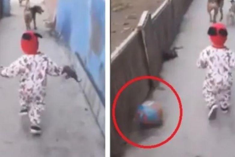 Bebé juega con perros y aparece pelota sin explicación
