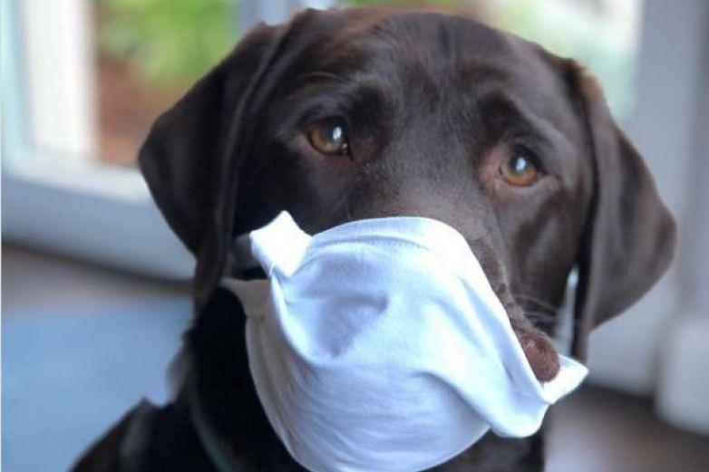 Ponerle cubrebocas a tu mascotas podría matarlas