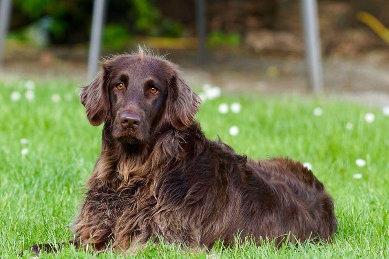 Tu mascota también puede padecer de artritis, atiéndela a tiempo