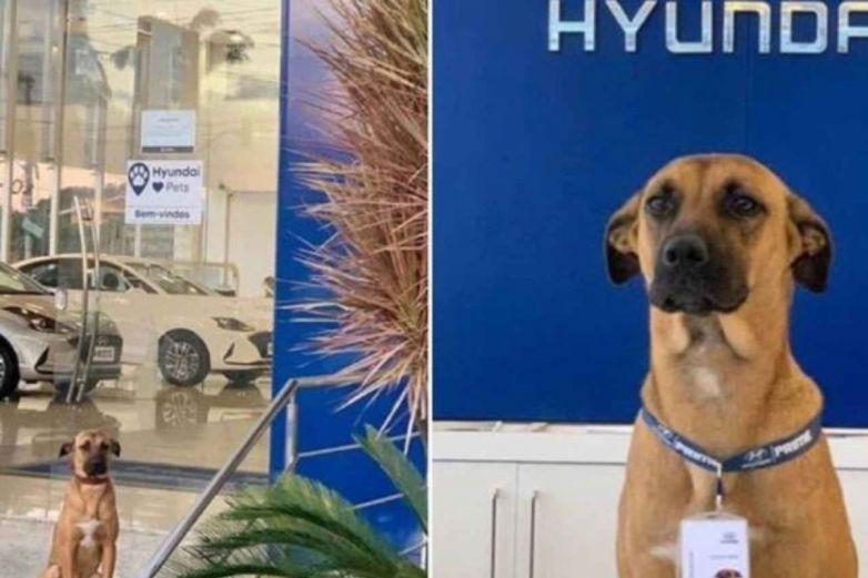 Perrito encuentra casa y empleo en una agencia de autos
