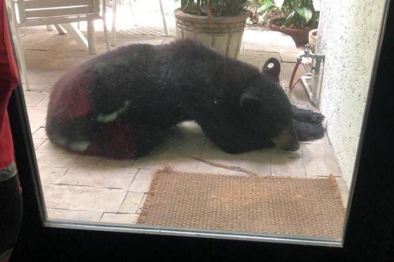 Profepa investiga captura y castración de oso en Nuevo León