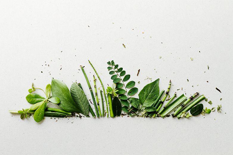 Se vuelven amantes de las plantas durante pandemia