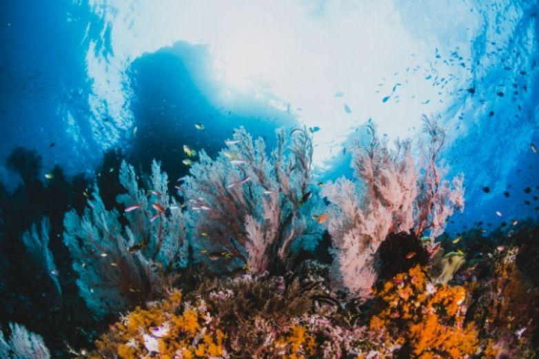 Prueban impresión 3D para restauración de arrecifes de coral