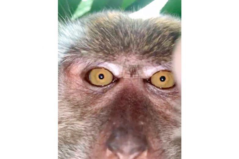 Mono se roba celular y se toma selfies