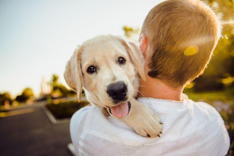 Conmemoran el día mundial del perro adoptado