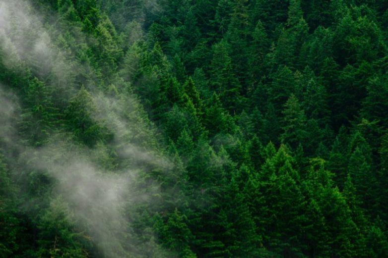 La importancia del sustento científico para los planes de reforestación