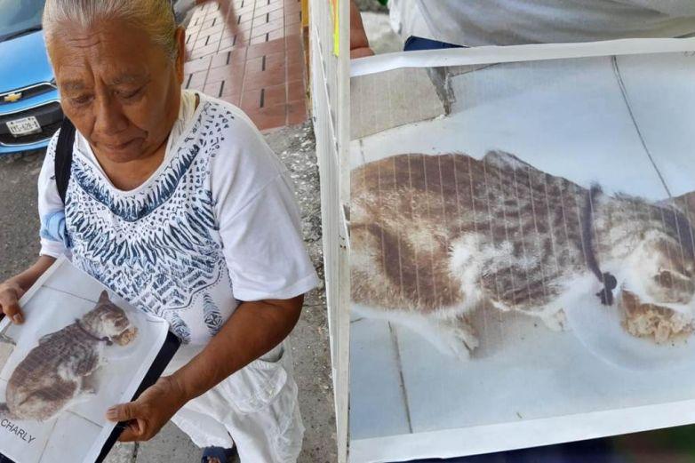 Mujer busca a su gato perdido ¡ofrece 200 pesos de recompensa!