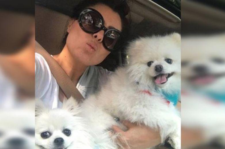 """Yadhira Carrillo pedirá en """"HOY"""" que adopten a sus perros"""