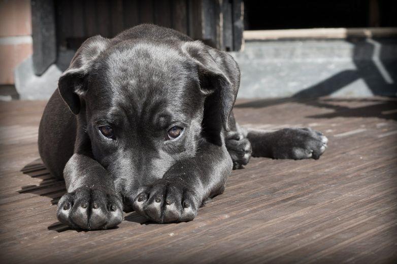 Graba a su perro en su ausencia y las imágenes le rompen el corazón