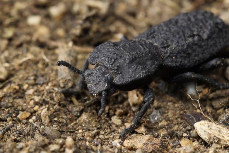 Estudian armadura del escarabajo para fabricar aviones