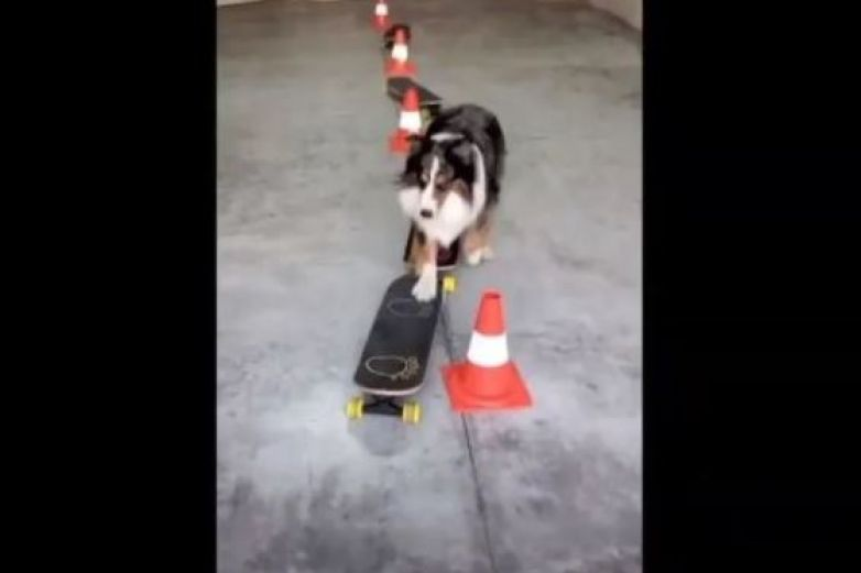 Perro sorprende con sus movimientos en patineta