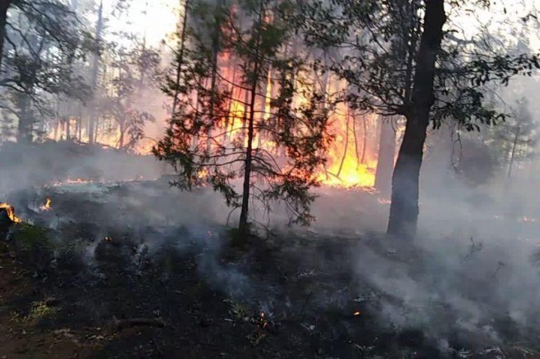 Registra estado más de 100 incendios forestales en 2021