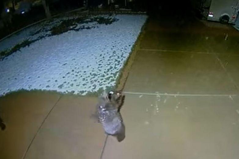 Captan la curiosa y adorable reacción de un osezno al ver la nieve caer