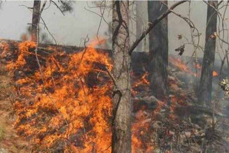 Incendio en Bocoyna se extiende a área natural protegida