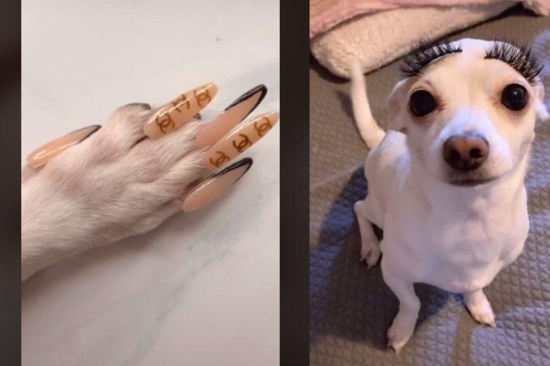 Fashion nivel: le pone uñas a su perrita
