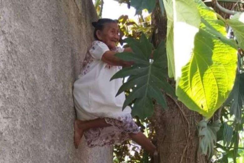 Video   Abuelita trepa árbol y se vuelve viral