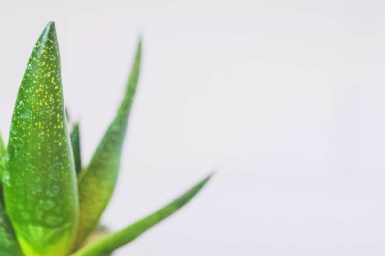 Plantas medicinales que puedes cultivar en casa
