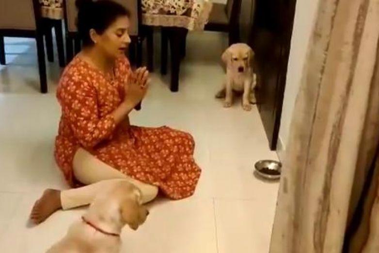 Video: Enseñó a sus perritos a orar antes de cada alimento