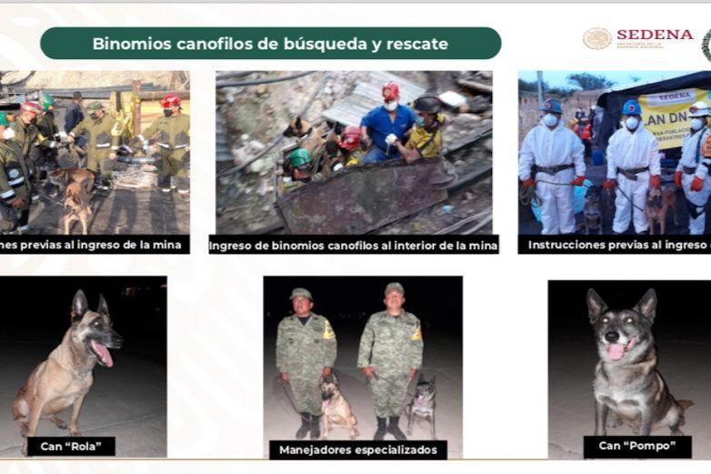 Rola y Pomo, los perritos que ayudaron en el rescate de la mina en Coahuila