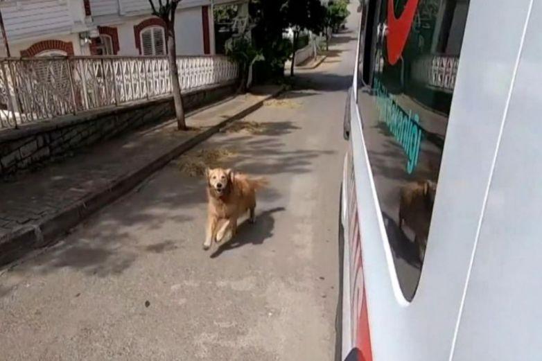 Video: Perro sigue la ambulancia donde iba su dueña