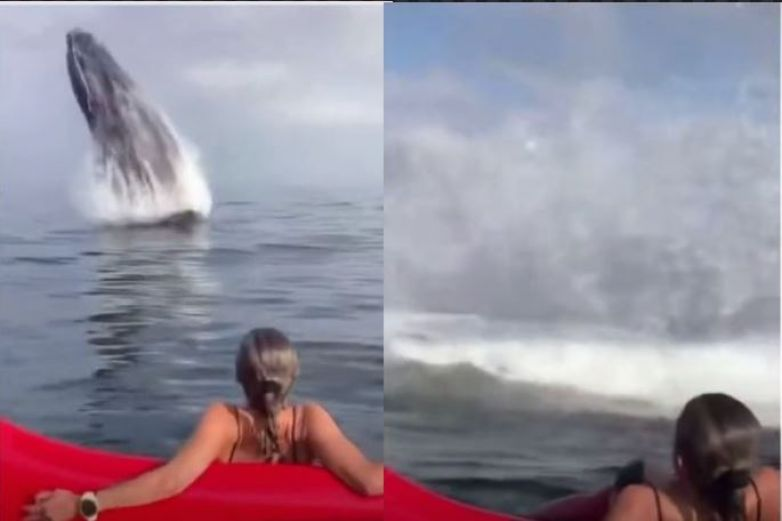 Video: Ballena sorprende a bañistas al salir a la superficie