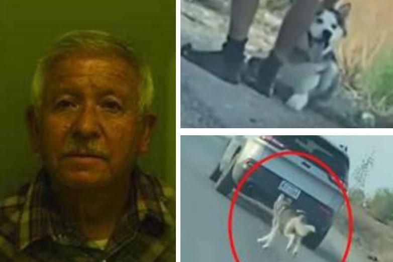 Detienen a hombre por abandonar perrito husky en El Paso