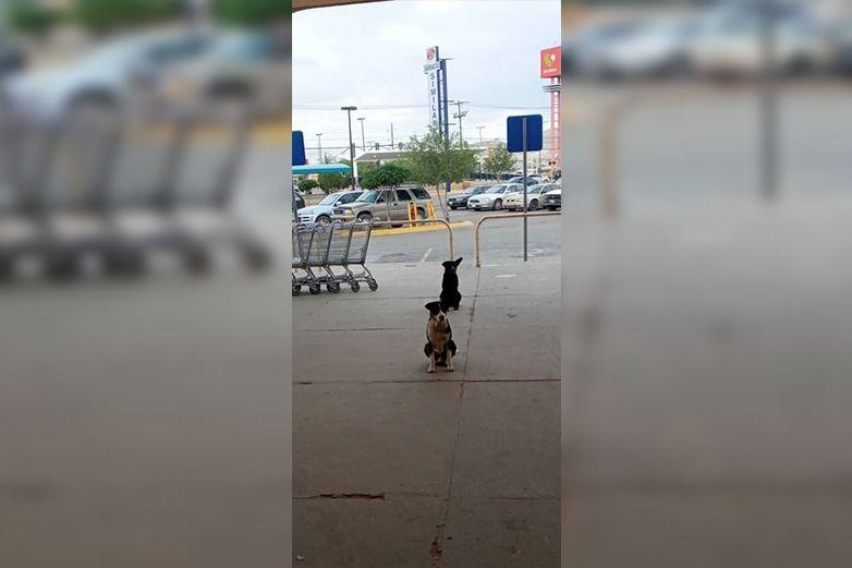 Perritos mantienen sana distancia en supermercado